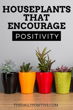 Life Hacks : Houseplants That Encourage Positivity When you are choosing plants for your home, dont just choose the most appealing, research the positive Hygge, Succulent Care, Interior Plants, Interior Design, Gardening Tips, Urban Gardening, Indoor Gardening, Container Gardening, Garden Planning