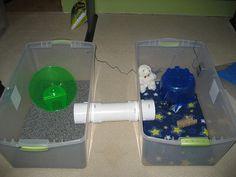 Cage Setup Examples - Page 2 - Hedgehog Central – Hedgehog pet care & owner forum