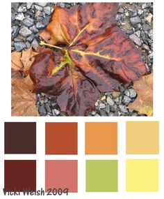 Fall color pallet things-for-jackie-or-you-know-not-whichever Colour Pallette, Colour Schemes, Color Combinations, Color Palate, Colour Board, Season Colors, Autumn Leaves, Autumn Harvest, House Colors