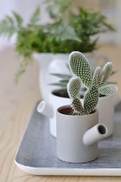 Small cactus is an amazing idea to decorate your house. In our today post we have for you 22 great DIY ideas with mini cactus for interior decoration. Cacti And Succulents, Planting Succulents, Potted Plants, Indoor Plants, Planting Flowers, Plant Pots, Small Cactus, Cactus Flower, Cactus Plante