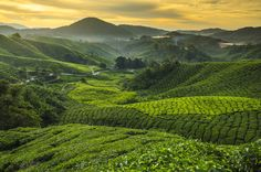 Check out Sunrise at tea plantation by Arzt Win Studio on Creative Market