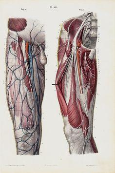 1853 Antique ANATOMY print fine anatomy by TwoCatsAntiquePrints, $39.00