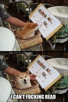 That dog looks so happy about his illiteracy.