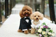 Cute Puppies Wedding - Rumble - 50 Cute Puppies I Adore | Art and Design