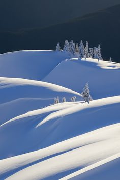 """travelgurus: """" The Layers of Snow at Mount Seymour Provincial Park, BC, Canada by Adam Gibbs (map in the source) Travel Gurus - Follow for more Beautiful Photographies! """""""