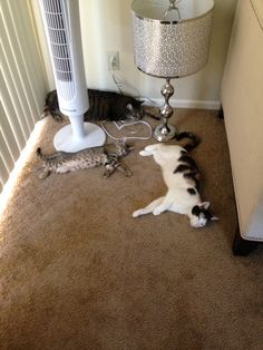 3 square feet is enough space for 3 kitties to sleep