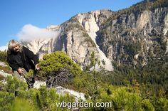 Nice wb in South Tirol Alps ... http://wbgarden.com/nove/wbgarden%20south%20tiriol/album/slides/wbgarden%20alps%2037a.html