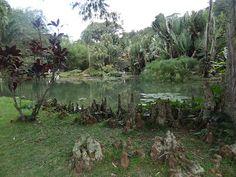 Blog Apaixonados por Viagens: Turistando pelo Rio... Jardim Botânico!!