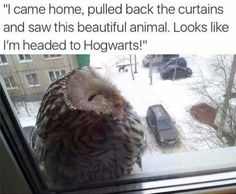 Who cares about hogwarts I just want to cuddle that guy. OUO - AWW - - Who cares about hogwarts I just want to cuddle that guy. OUO The post Who cares about hogwarts I just want to cuddle that guy. OUO appeared first on Gag Dad. Animal Jokes, Funny Animal Memes, Cute Funny Animals, Funny Animal Pictures, Cute Baby Animals, Funny Pics, Animal Pics, Funny Stuff, Sports Pictures