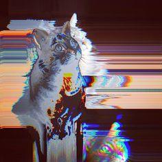 #glitch #cat #animal #pet #cute #art #glitchart