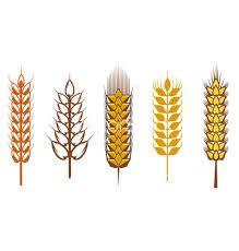 Imagini pentru vector logo cereals