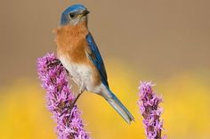Growing bird seed:  Plants that allow you to harvest seeds attract more birds to your backyard.