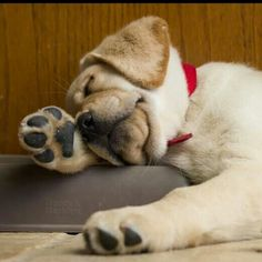 tired...this puppy looks like I feel right now!