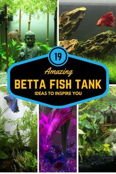 Ready to add a tank mate for your betta fish today make for Betta fish care sheet
