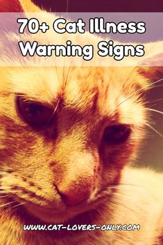 Worried that your cat may be sick? Here are over 70 cat illness warning signs that could be an indication of a disease or disorder in your cat.