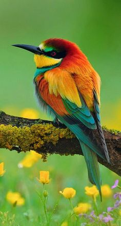 What A Beautiful, Colorful, Bird!!