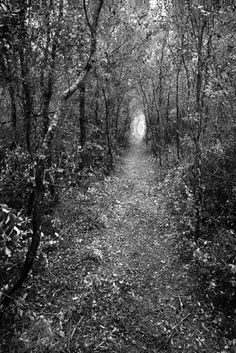 Clyde Butcher - Black and White Fine Art Photographer Fine Art Photography, Landscape Photography, Nature Photography, White Photography, World Pictures, Nature Pictures, Florida Trail, Closer To Nature, Photographic Prints