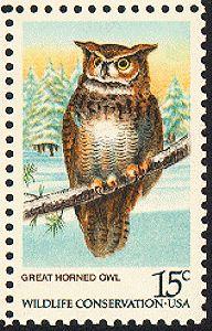 Great horned owl  [1978-08-26]