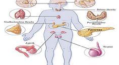 endokrinisistem1