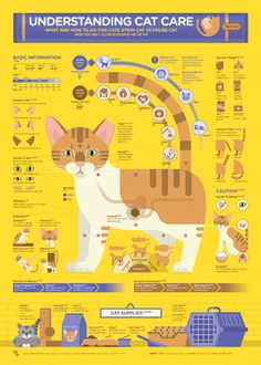 1806 Understanding Cat Care Infographic Poster on Behance - Infographics - Infographic Examples, Chart Infographic, Infographic Templates, Art Resume, Cat Birth, Illustrator, Information Graphics, Poster On, Poster Ideas