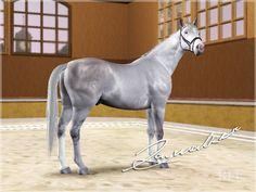 sims 3pets horses | belgian warmblood on Tumblr