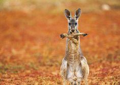 wild life photos - Google Search