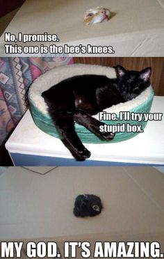 Cats in a box (cats,cat,funny,kitty,box,you gotta try this)
