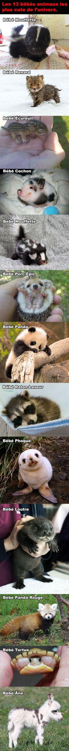 Les 13 bébés animaux les plus cute