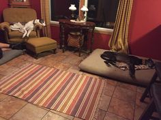 Lazy hounds