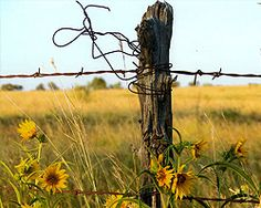 Barbed wire and wild flowers