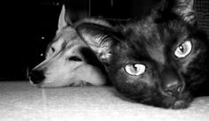 Lovely pets,