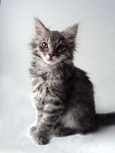 Found 10 week old Sam on a 2008 US website. He is so like Milo. Would love to see what he looks like now!