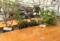 Heidrun Meadery - greenhouse tasting