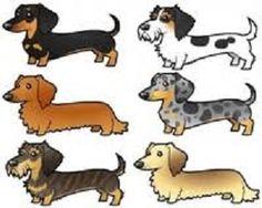 dachshund colors - Buscar con Google