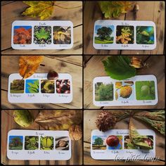 Les arbres Montessori Science, Alternative Education, Autumn Activities For Kids, Outdoor Classroom, Outdoor Learning, Forest School, Montessori Materials, Biomes, Early Education