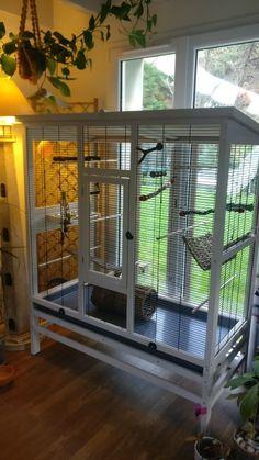 Bird Cage Design, Diy Bird Cage, Animal Room, Animal House, Bird Aviary For Sale, Pet Plan, Large Bird Cages, Parrot Pet, Pet Furniture