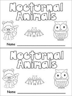 A Place Called Kindergarten: nocturnal animals or day and