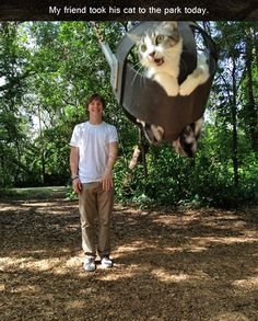 My friend took his cat to...