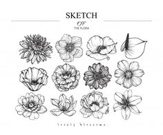 Variety flower and leaf drawings. Black and white with… Sketch Floral Botany set. Variety flower and leaf drawings. Black and white with line art on white backgrounds. Flower Sketches, Art Sketches, Flower Drawings, Leaf Drawing, Floral Drawing, Illustration Blume, Botanical Illustration, Tatouage Fibonacci, Cosmos Flowers