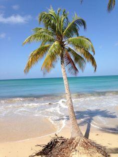 La plage des Salines #Martinique idylique