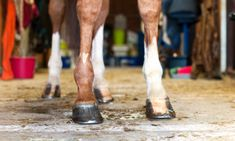 Hoof Trimming to Improve Structure and Function – The Horse Mechanical Force, Feet Show, Structure And Function, Types Of Horses, Bone Density, Veterinary Medicine, Workout Schedule, Regular Exercise, Trauma