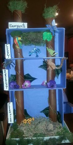 Take the classic diorama to new heights with this project about each layer of the rainforest.
