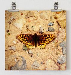 Colorado Butterfly in Riverbed, Fine Art Print