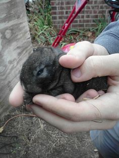 another baby bunny in hand