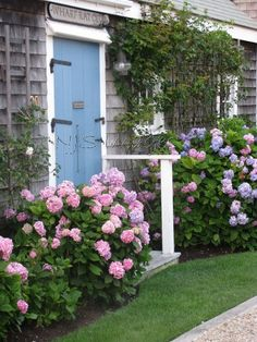 Pink hydrangeas planted in front of a cottage