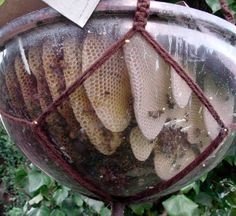 Make a Bubble Hive For your Backyard Bees | 16 Bee Hive Plans - Build a safe place to save the bees! at http://pioneersettler.com/best-bee-hive-plans