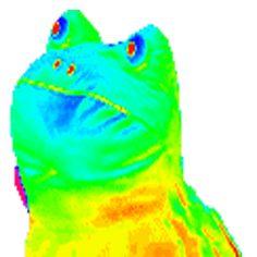Rainbow MLG Doge | UTILILAB SearchGUARDIAN