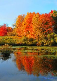 Autumn Looking Glass