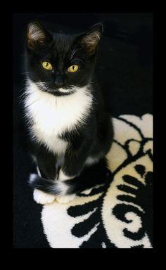 .gotta love a black & white kitty!.