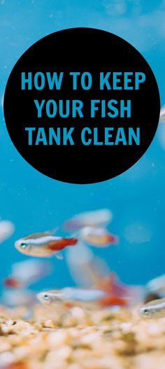 Keeping your fish tank or aquarium clean is critical to keep your pets healthy. But what's the easiest way to do it? Here are some handy tips for fish owners...